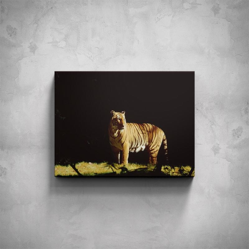 Obrazy - Obraz - Tygr indický
