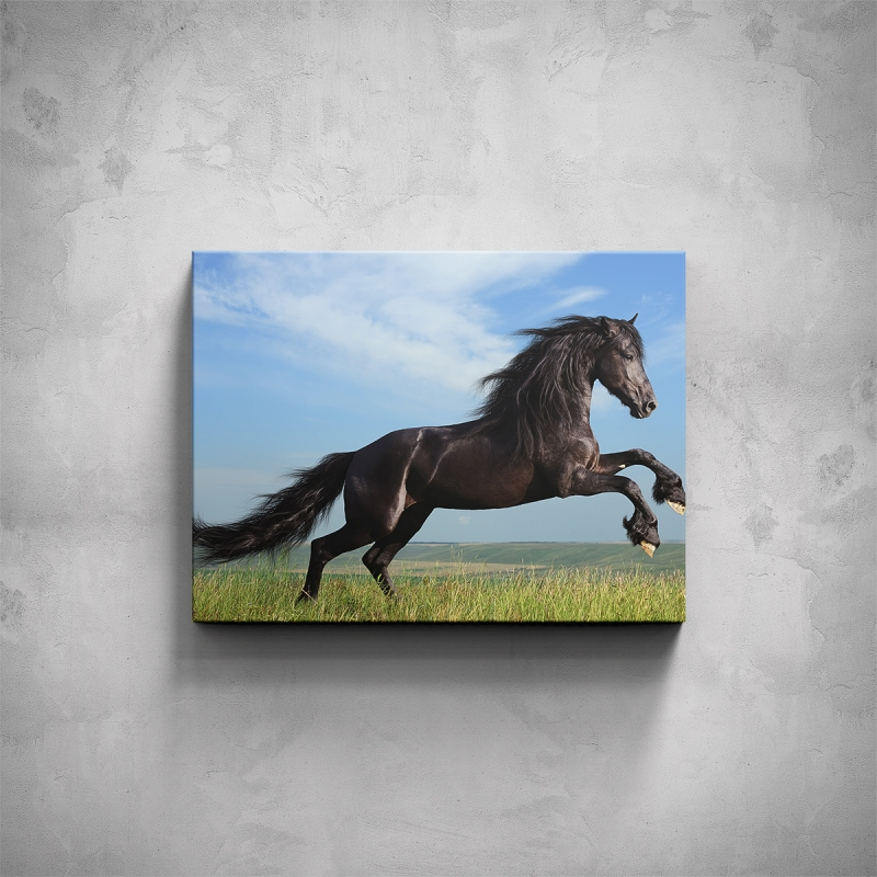 Obrazy - Obraz - Černý kůň