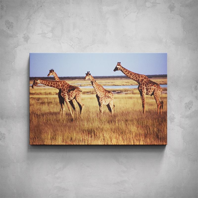 Obrazy - Obraz - Žirafy
