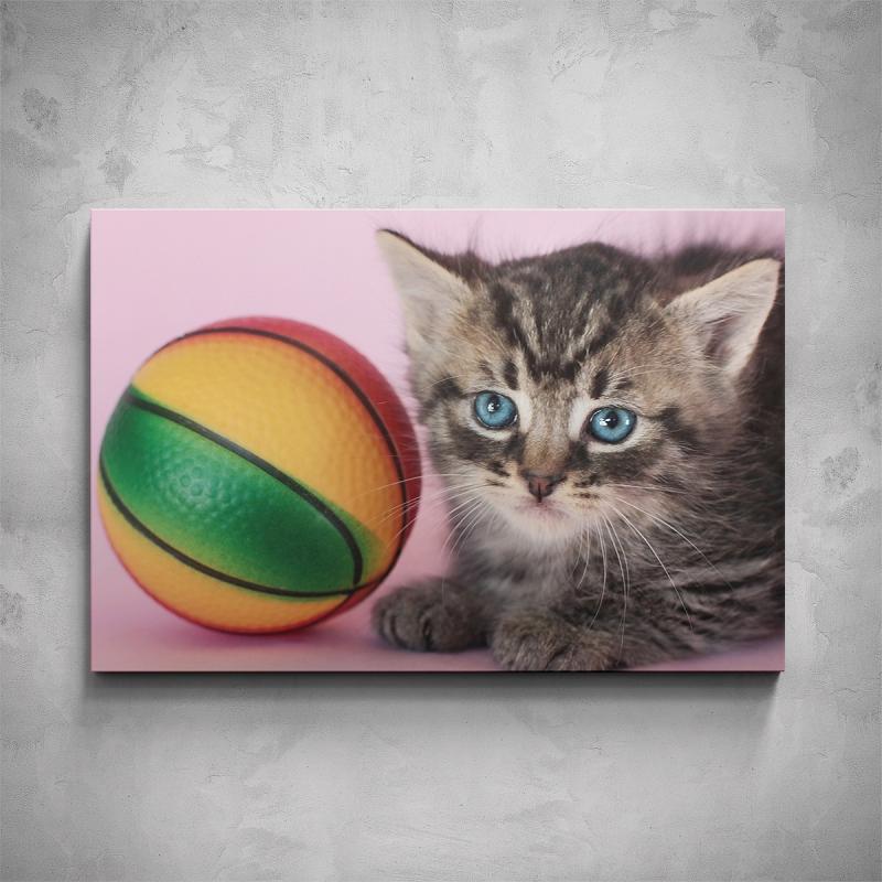 Obrazy - Obraz - Kotě s míčkem