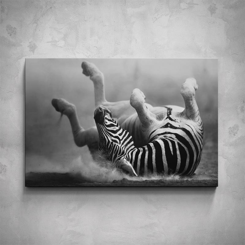 Obrazy - Obraz - Ležící zebra