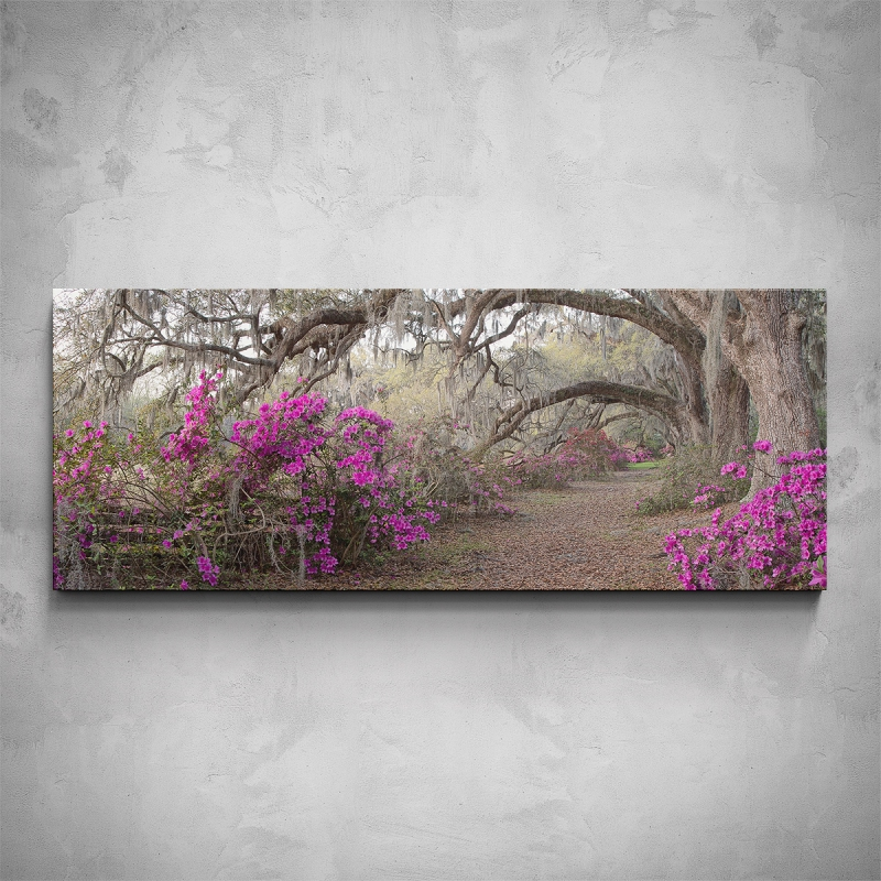 Obrazy - Obraz - Staré stromy