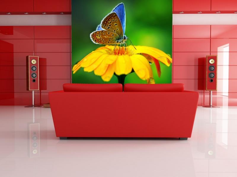 Tapety - Tapeta - Motýl na květu 2