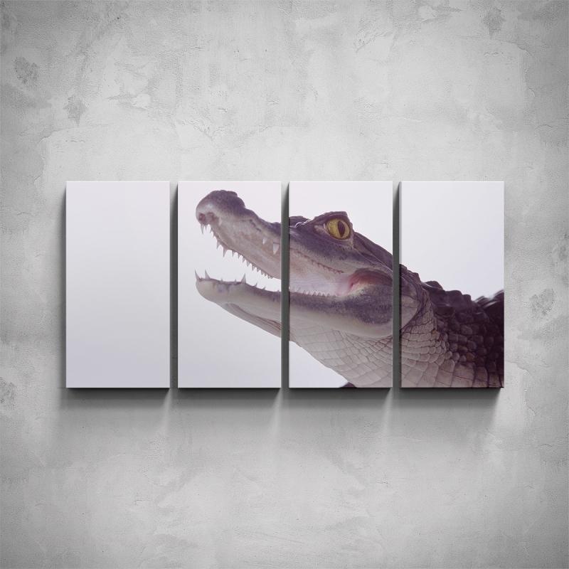 Obrazy - 4-dílný obraz - Krokodýl