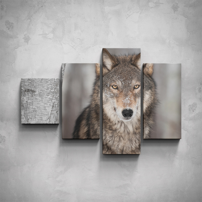 Obrazy - 4-dílný obraz - Vlk