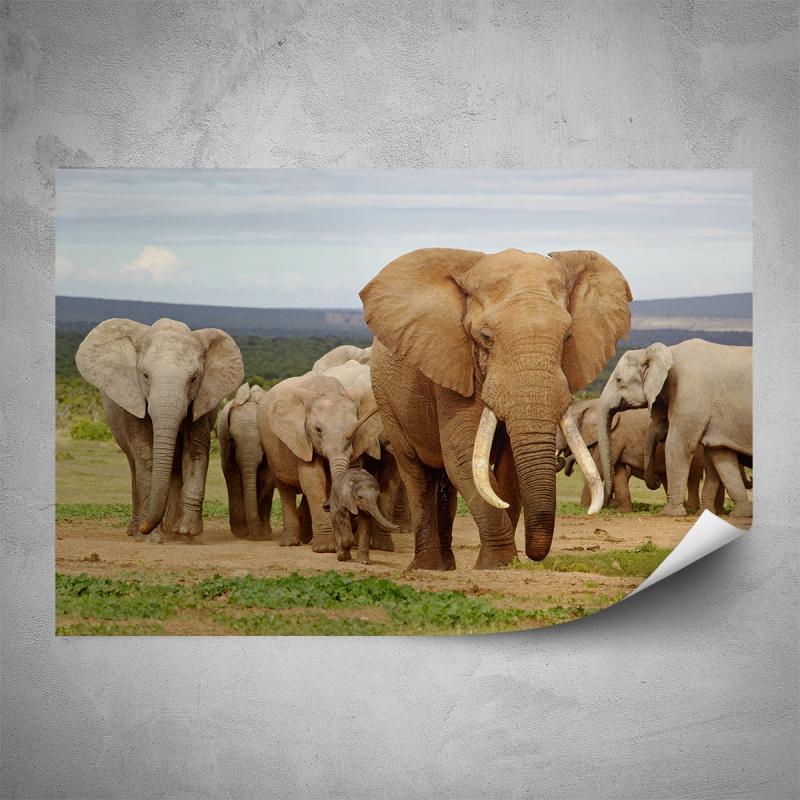 Plakáty - Plakát - Stádo slonů