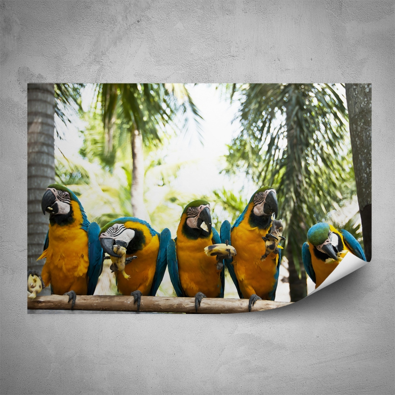 Plakáty - Plakát - Papoušci ARA