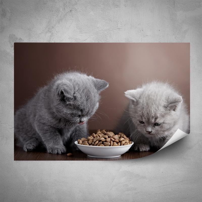 Plakáty - Plakát - Šedá koťata