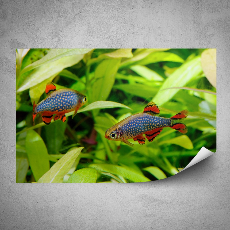Plakáty - Plakát - Rybky v akváriu