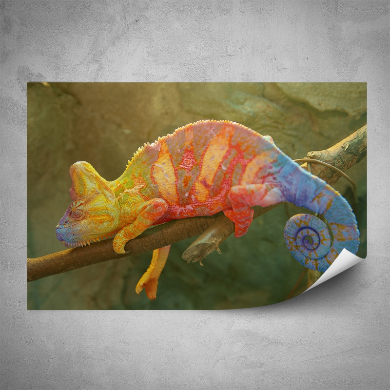 Plakáty - Plakát - Barevný chameleon