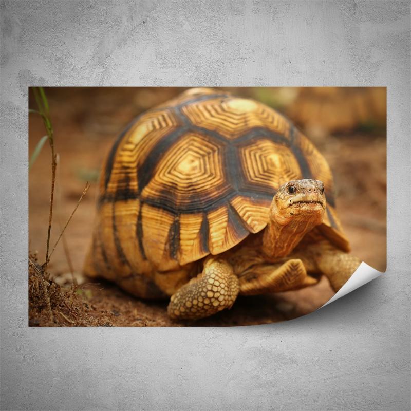 Plakáty - Plakát - Želva