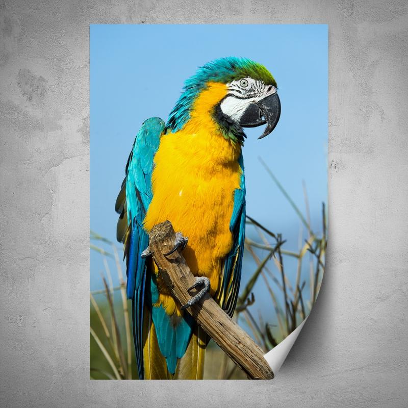 Plakáty - Plakát - Žluto modrý papoušek