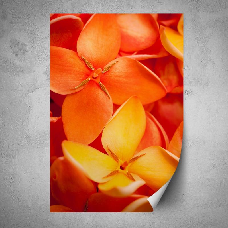 Plakáty - Plakát - Oranžové makro