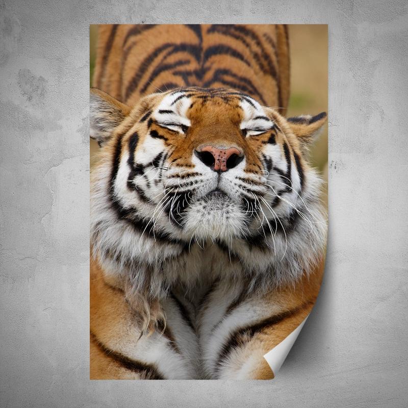 Plakáty - Plakát - Tygr z blízka