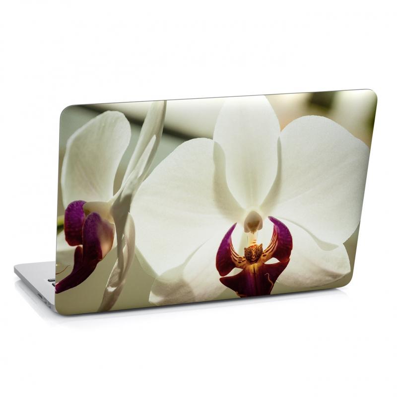 Samolepky na notebook - Samolepka na notebook - Bílá orchidej