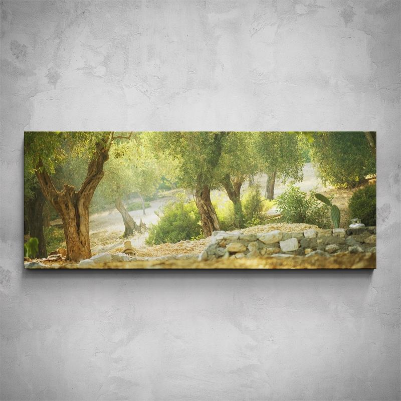 Obrazy - Obraz - Olivovníkové stromy