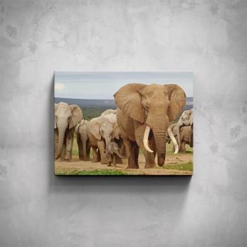 Obraz - Sloní stádo