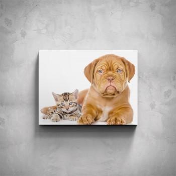 Obraz - Ležící kočička s pejskem