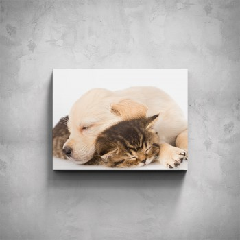 Obraz - Spící kočička s pejskem