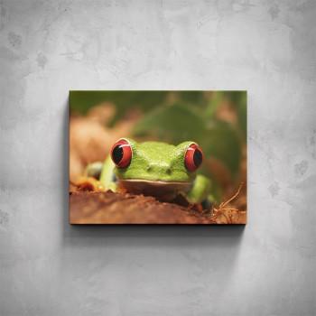 Obraz - Žabka