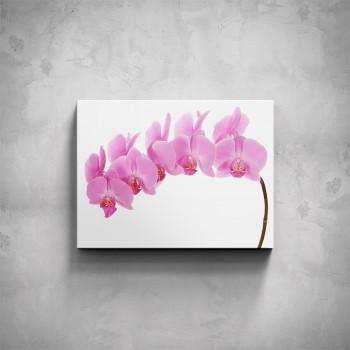 Obraz - Růžová orchidej