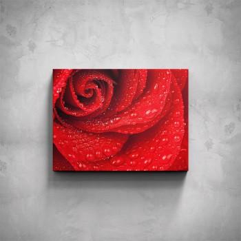 Obraz - Růže detail