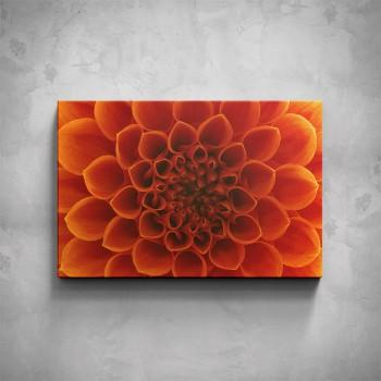 Obraz - Oranžový květ detail