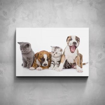 Obraz - Domácí mazlíčci