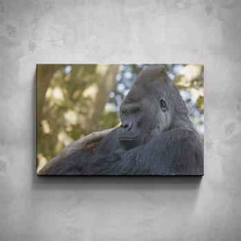 Obraz - Gorila profil