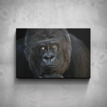 Obraz - Gorila