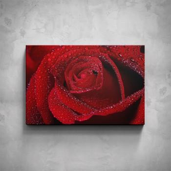 Obraz - Červená růže detail