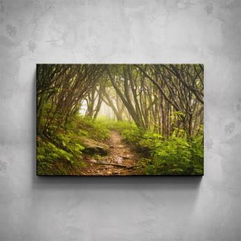 Obraz - Lesní stezka
