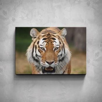 Obraz - Indický tygr