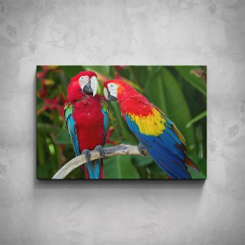 Obraz - Papoušci Ara