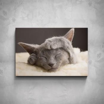 Obraz - Spící kočka