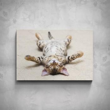 Obraz - Kotě