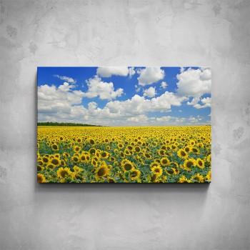 Obraz - Slunečnicové pole