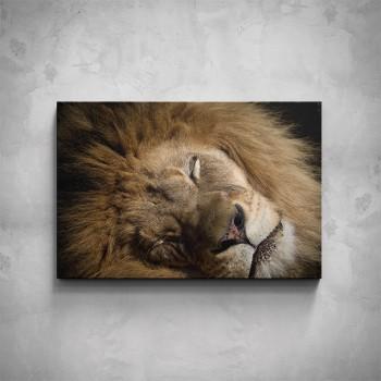 Obraz - Spící lev