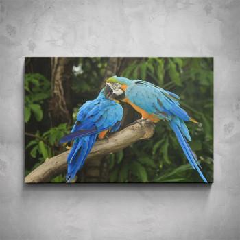 Obraz - Papoušci