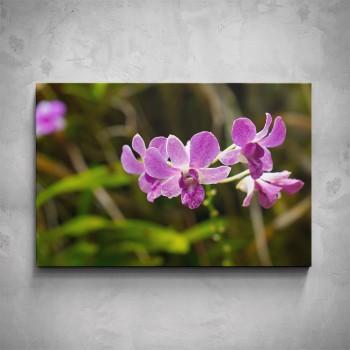 Obraz - Divoká orchidej