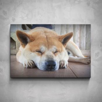 Obraz - Zatoulaný pes