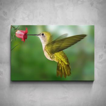 Obraz - Kolibřík