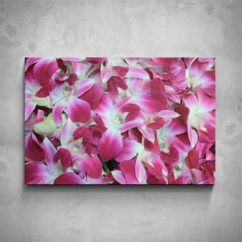 Obraz - Červeno-bílé orchideje