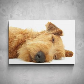 Obraz - Spící pes