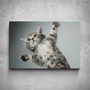 Obraz - Malé kotě