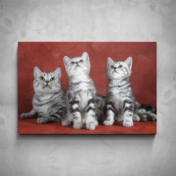 Obraz - Koťata