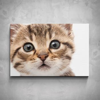 Obraz - Kočka detail