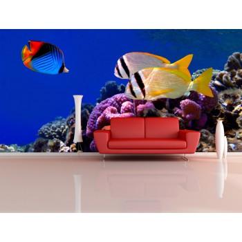 Tapeta - Mořské rybky 2