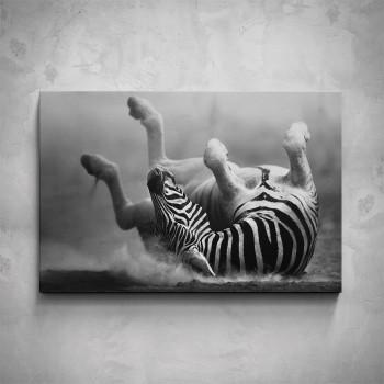 Obraz - Ležící zebra