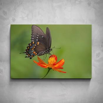 Obraz - Černý motýl